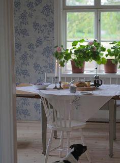 blue / white/ cotton/ wood/ geranium flowers in terra-cotta pots on window sills