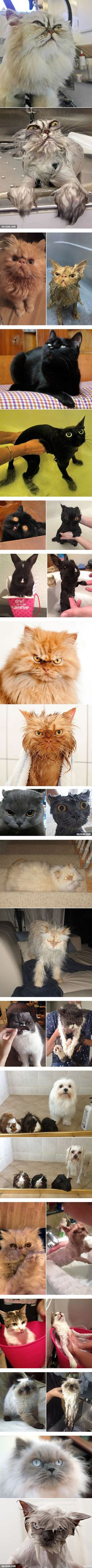 Before And After Bath - 9GAG