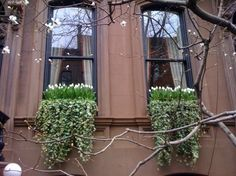 I love this for Spring - tulips in your window box!
