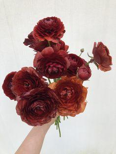 Rust ranunculus – Creative Summer Wedding Tips Whimsical Wedding, Floral Wedding, Wedding Greenery, Wedding Flowers, Boho Wedding, Wedding Ceremony, Rustic Wedding, Summer Wedding Decorations, Summer Wedding Bouquets
