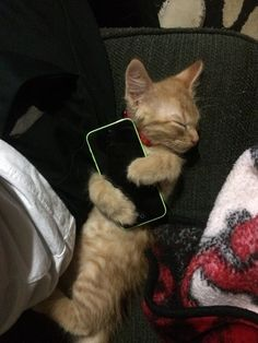 Pin for Later: 50 of the Cutest Animal GIFs and Pictures EVER This kitty that's so attached to technology Source: Reddit user kobe-wan-kenobi via Imgur