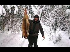 Hunting for Fox in winter.  Охота на лису зимой.