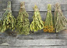Μάθε τις ασθένειες που θεραπεύει κάθε βότανο!!! -Πλήρης κατάλογος | Alexiptoto