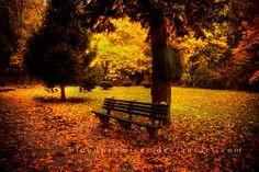 33 autumn pictures
