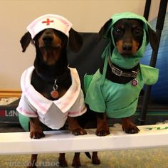 Crusoe the celebrity dachshund — This PSA is brought to you by Dr. Crusoe and Nurse...