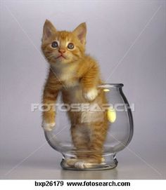 A Photo Of Kitten In Fish Bowl