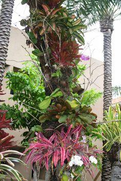 how to grow bromeliads outdoors
