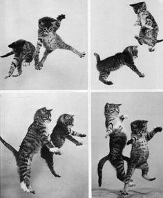 Cat Dance Party! #dancing #cats #kittens