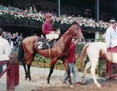 Dr. Fager at Saratoga before winning the 1968 Whitney. Braulio Baeza, up.  How to Exercise a Thoroughbred Race Horse at www.janicelblake.com