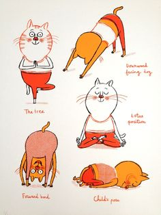 Image of Yogi Cats