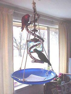 Training Your Pet Parrot Diy Parrot Toys, Diy Bird Toys, Pet Bird Cage, Bird Cages, Homemade Bird Toys, Budgie Toys, Parrot Perch, Bird Perch, Bird Stand