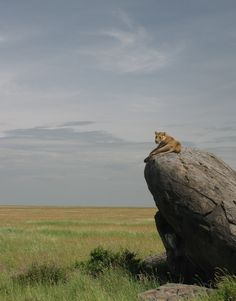 Serengeti rates & special offers from Southern African safari experts Southern Destinations. Tanzania, Kenya, Out Of Africa, East Africa, African Animals, African Safari, Les Continents, Jolie Photo, Fauna