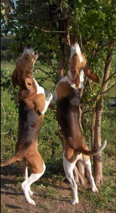 Aarroo!  Something up that tree!
