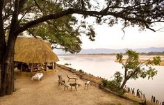 From 6 unique bush camps and the award winning Mfuwe Lodge in South Luangwa National Park, The Bushcamp Company provides traditional African walking safaris. Wildlife Photography, Travel Photography, Safari Wedding, African Safari, Travel Memories, Company Ideas, National Parks, Places To Visit, Country Roads