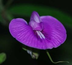This Flower Grows In The Real GardenThe Rain Forest