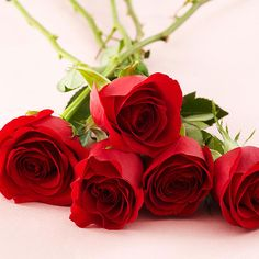 Red roses are actually known as the lover's rose! Click through for more fun facts: http://www.bhg.com/holidays/valentines-day/decorating/romantic-flower-meanings/?socsrc=bhgpin020915redroses&page=2