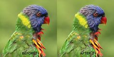 Quick Guide to Using Image Sharpening Software
