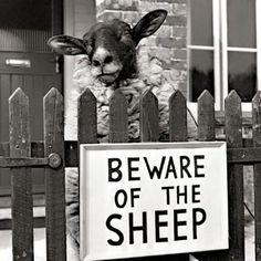 Beware of the sheep.