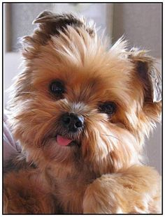 ab500ddb9e5418908187b2f6b69a98e2.jpg (600×793)  Order an oil painting of your pet now at www.petsinportrait.com