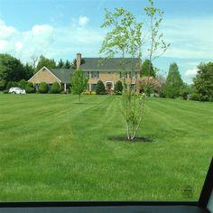 HUGE front yard - Joppa, MD