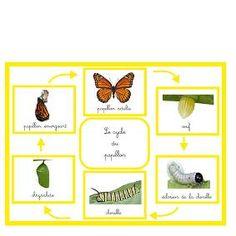 Dossier «papillon»