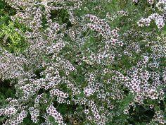 Abbotsbury Subtropical Gardens - Flip van den Elshout - Picasa Web Albums
