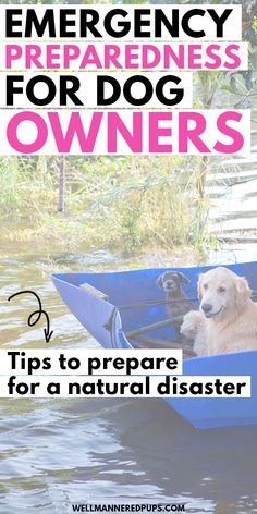Emergency preparedness for dog owners. Tips to prepare for a natural disaster. Natural Disasters, Emergency Preparedness, Dog Owners, Where To Go, Your Dog, You Got This, Pup, How To Get, Dogs