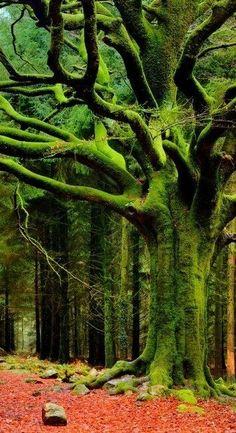 de groene boom met mos erop