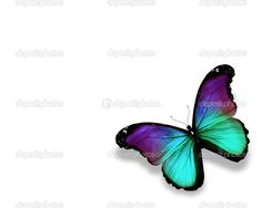 Violet Butterfly | Dark green violet butterfly morpho, isolated on white - Stock Image