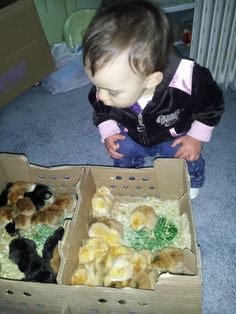 Awww..... It's #chicken season and the kids are all excited!