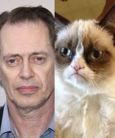 Steve Buscemi and Angry Cat