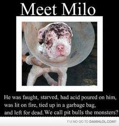Poor pup. ):