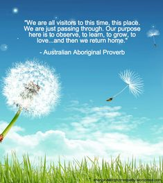 Posts about australian aboriginal proverb written by Jenice Stebel at Energy Healing Homeopathy Spiritual Photos, Dandelion Wish, Word Of Advice, Homeopathy, Beautiful Bags, Wallpaper Backgrounds, Wallpapers, Proverbs, Grass
