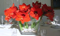 A vibrant, eye-catching centerpiece is created very simply with a glass vase, some river pebbles and a handful of bright red amaryllis stems cut short so that the blossoms rest just at the rim of the vase.  You could do this yourself.