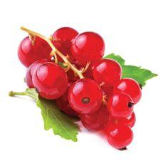 Porzeczka czerwona - Ribes Rubrum