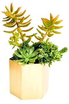 Leif Brass Hexagon Planter, $54; leifshop.com