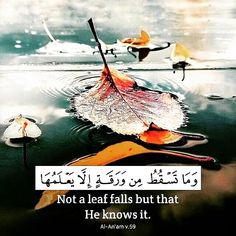 Allah The Light of Heavens and The Earth – Saqib Abraham – Medium Islamic Qoutes, Islamic Inspirational Quotes, Muslim Quotes, Religious Quotes, Arabic Quotes, Hindi Quotes, Quran Verses, Quran Quotes, Allah Quotes