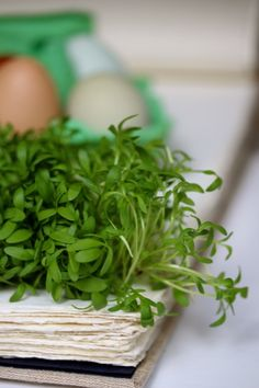 cress from the farmer market