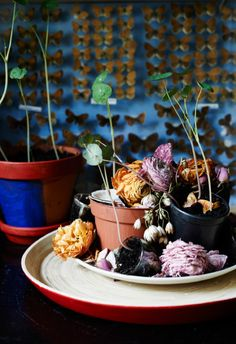 Butterflies and dried flowers on display in Nor's home  - HOME TOUR: NOR TOMA'S BOHEMIAN STUDIO APARTMENT IN STOCKHOLM.