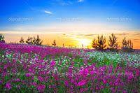 Poesie da Rose Isax: I fiori mi mettono allegria dentro di me