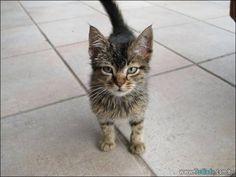 32 fotos de gatas e gatos engraçados