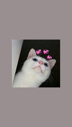 Homescreen Wallpaper, Cat Wallpaper, Cute Cat Memes, Boujee Aesthetic, Cute Cartoon Wallpapers, Aesthetic Wallpapers, Animal Pictures, Cute Cats, Funny Animals