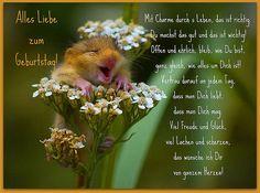 Alles Gute zum Geburtstag - http://www.1pic4u.com/blog/2014/05/29/alles-gute-zum-geburtstag-134/