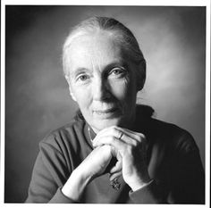 """Jane Goodall on Science and Spirit: The Iconic Primatologist Talks to Bill Moyers and Reads Her Poem """"The Old Wisdom"""" Wise Women, Famous Women, Famous People, Jane Goodall, People Of Interest, Images Google, Aged To Perfection, Ageless Beauty, Women In History"""