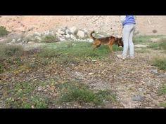 Obi Wan leidet sehr im Tierheim - http://www.tier-kleinanzeigen.com/ads/obi-wan-leidet-sehr-im-tierheim/