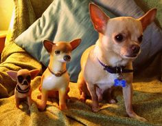 evolution of the chihuahua | by EllenJo