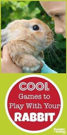 Pet Rabbits love to play games. Here a… Proper pet rabbit care includes playtime! Pet Rabbits love to play games. Here are the best ideas for DIY toys and games you can play with your bunny! Bunny Cages, Rabbit Cages, House Rabbit, Rabbit Toys, Pet Rabbit, Diy Bunny Cage, Pet Bunny Rabbits, Baby Bunnies, Cute Bunny