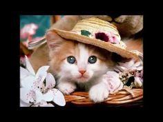 Kedi Sesi, Kedi Resimleri, Kedi yavrusu sesi, Yavru kedi sesi,
