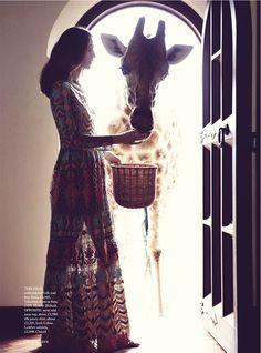 Que sonho! alimentar uma girafa