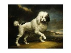 A Standard Poodle in a Coastal Landscape Giclee Print by James Northcote. Find art you love and shop high-quality art prints, photographs, framed artworks and posters at Art.com. 100% satisfaction guaranteed.
